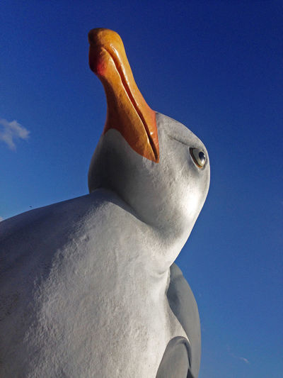 large model seagull looking up on a clear blue sky Art Art And Craft Artistic Beak Bird Blue Blue Skty Creativity Large Birds Looking Up Models No People Seagull Seagulls Seaside Seaside_collection Unreal