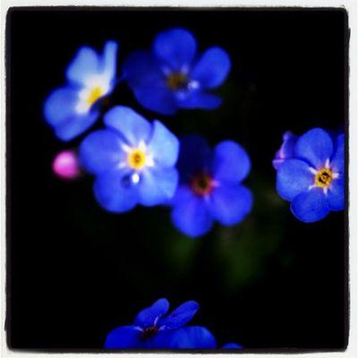 bluemangroup Flowers Flower Details Lobostudio Lobo_flowers
