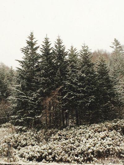 やっぱり峠は雪だった!