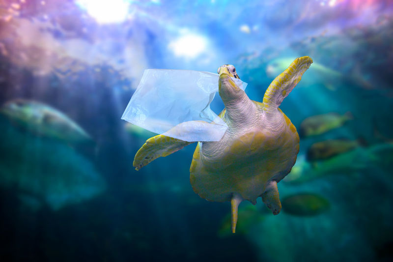 Low angle view of turtle holding plastic bag in mouth under water