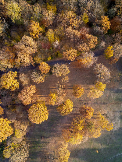 Aerial View Of Trees Growing On Field In Forest During Autumn