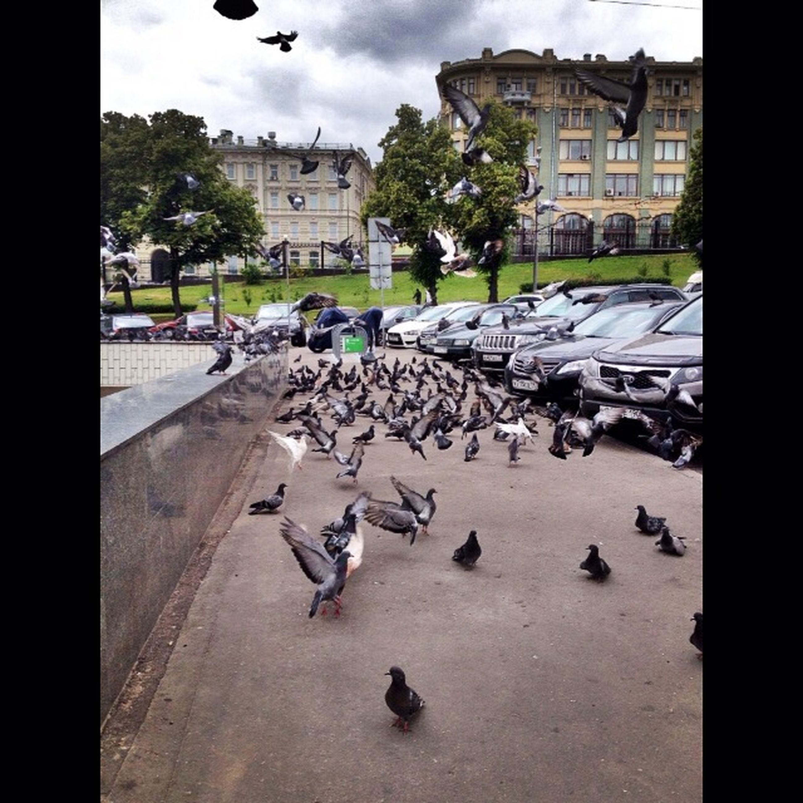 bird, animal themes, building exterior, wildlife, animals in the wild, architecture, built structure, flying, flock of birds, transfer print, pigeon, city, auto post production filter, high angle view, medium group of animals, sky, street, seagull, day