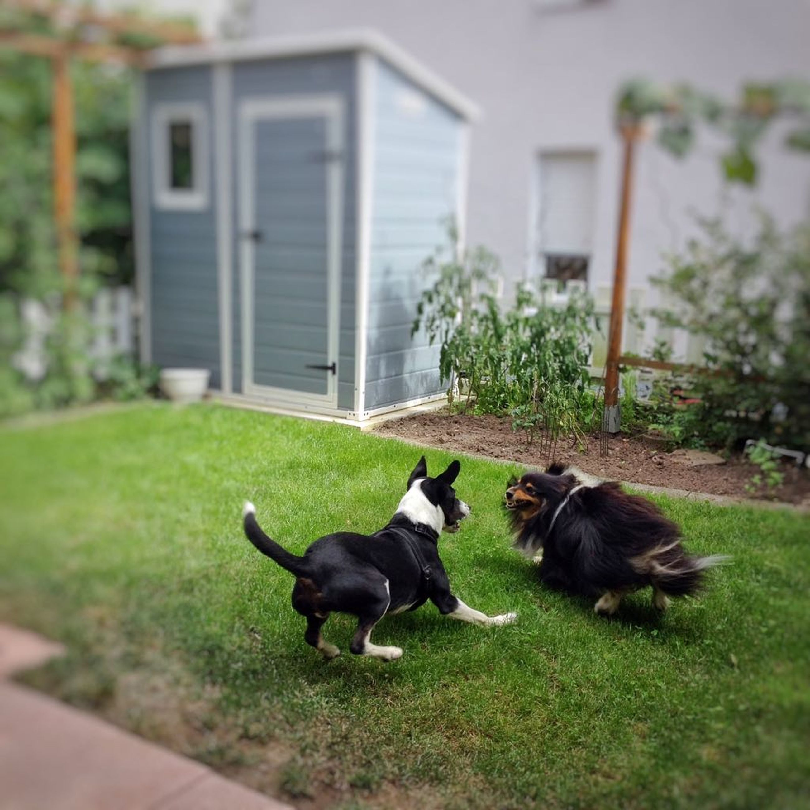 pets, dog, domestic animals, animal themes, grass, one animal, mammal, outdoors, building exterior, front or back yard, day, built structure, plant, no people, architecture, friendship, full length, nature