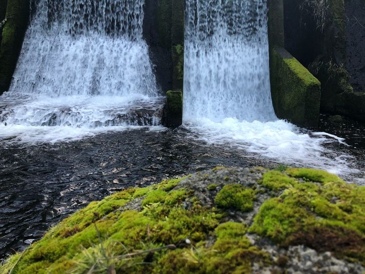 Nature Oregon Beauty Oregon Waterfall Motion Long Exposure Nature Water No People Beauty In Nature Moss Scenics Outdoors Forest Day
