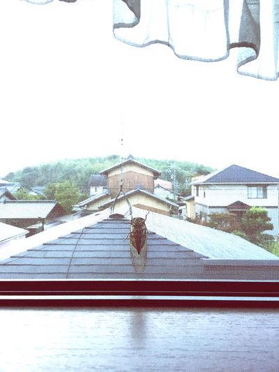 Home Is Where The Art Is Summer Days Good Morning Japan Photography 蝉 が うるさい