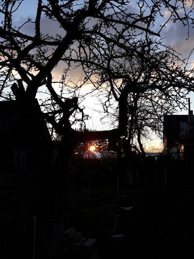 Sun Afternoon Spring Village Black Colors PLZ FOLLOW ME Followme Tree Silhouette Sky Architecture