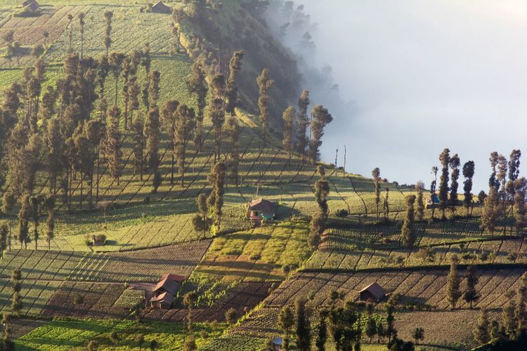 High angle view of agricultural field at bromo tengger semeru national park