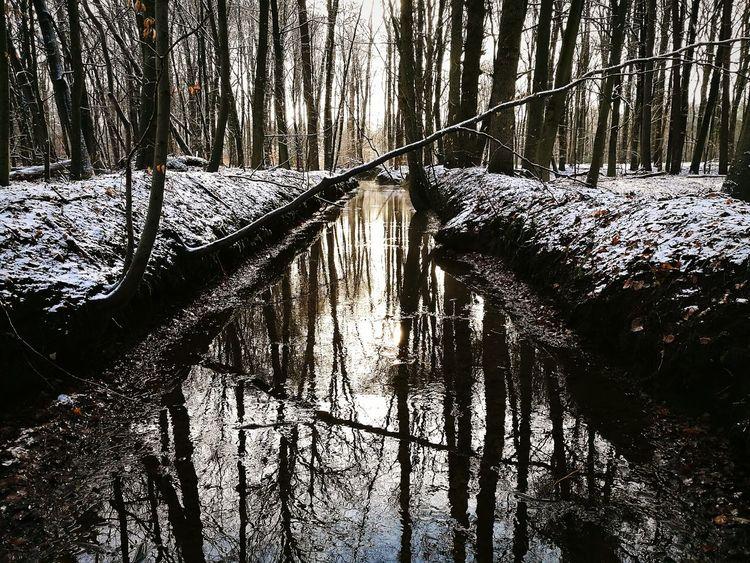 Wintertime in Dutch woods Outdoors Water Stream In Winter Scene
