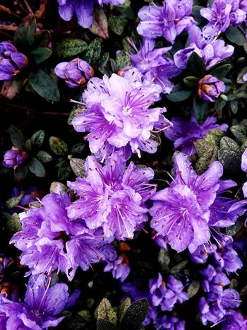 spring is here guys Flower Head Flower Water Purple Petal Close-up Plant