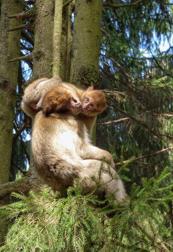 Monkey Monky Animals Animal Animal Photography Animalphotography