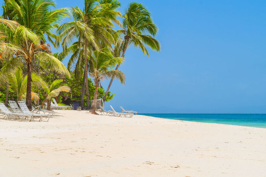 Beautiful beach with palms, sunbeds, blue sky and turquoise water, Dominican Republic, caribbean sea Summertime Bacardi Island Beach Beauty In Nature Blue Cayo Levantado Clear Sky Cold Temperature Day Horizon Over Water Nature No People Outdoors Palm Tree Paradise Sand Scenics Sea Sky Summer Sunset Tranquil Scene Tranquility Tree Water