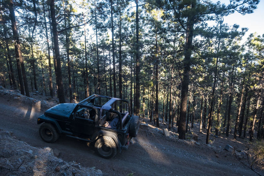 off road car in a pathway in the forest Alone El Teide National Parc Freedom Vacations Car Cloud - Sky Day Forest Growth Lifestyles Mountain Nature No People Off Road Outdoors Pathway In The Forest Relaxing Moments Solitude Sunny Day Tenerife Transportation Tree Tree Trunk Wheels