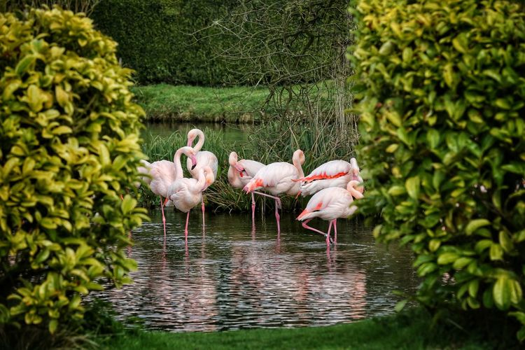 Animal Themes Animal Wildlife Animals In The Wild Beauty In Nature Bird Birdland Bourton On The Water Cheltenham Day Flamingo Nature No People Outdoors Water