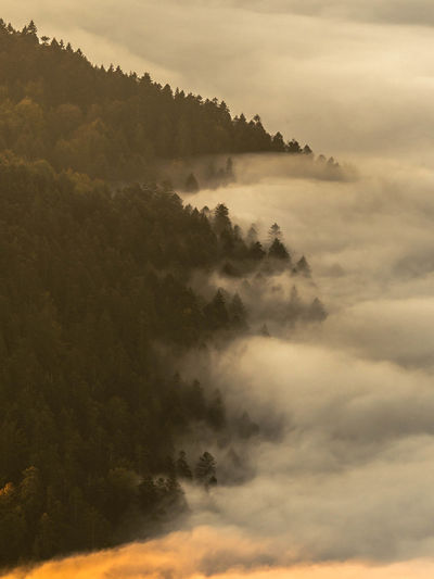 Pieniny Poland Tree Trees Beauty In Nature Cloud - Sky Day Environment Fog Hazy  Idyllic Landscape Mountain Nature No People Non-urban Scene Outdoors Pieniny Plant Scenics - Nature Sky Sunset Tranquil Scene Tranquility Tree