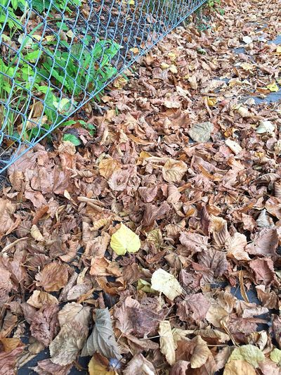 Leaf Autumn Change Season  Dry Leaves Fallen Close-up Abundance Fragility Fallen Leaf Day Natural Condition Surface Level Nature Brown Large Group Of Objects Outdoors Tranquility Paving Stone