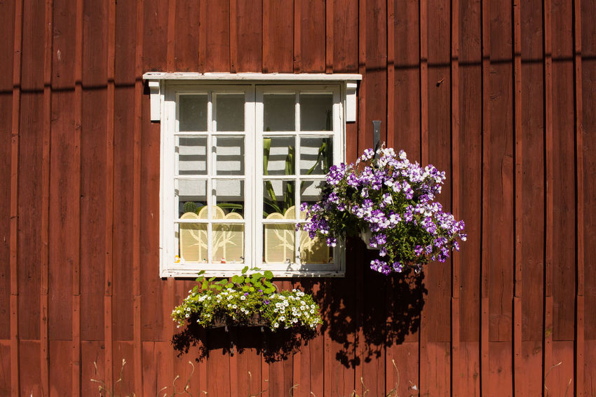 Architecture Building Exterior Close-up Day Flower Growth Nature No People Outdoors Plant Window Window Box Wood - Material The Week On EyeEm