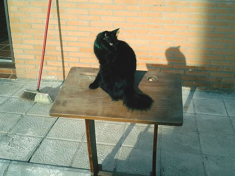Street Cat Pupil Desk Vintage Eye4photography  Posing Miau *-*