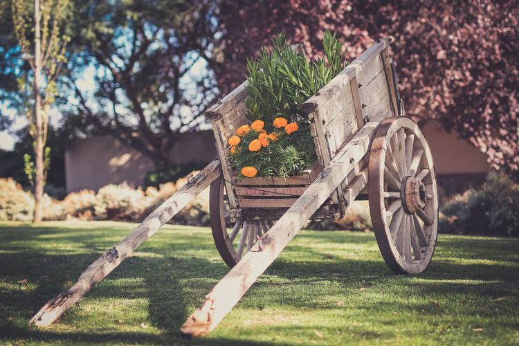 Agriculture Autumn Day Field Flower Food Freshness Fruit Grass Healthy Eating Horse Lawn Nature No People Old Transport Outdoors Pumpkin Rural Scene Tree Vegetable