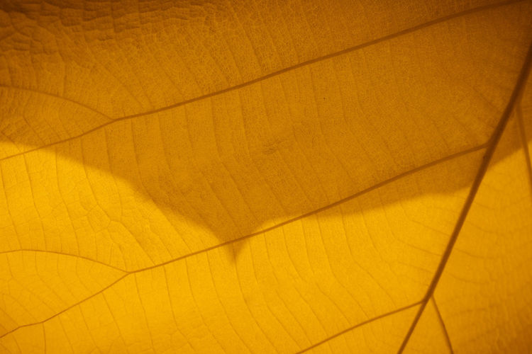 Macro shot. Closeup texture leaf in nature. Backgrounds Yellow No People Full Frame Pattern Flooring Indoors  Close-up High Angle View Wood - Material Shadow Textured  Wood Abstract Sunlight Nature Hardwood Floor Orange Color Brown Leaf Texture Nature Macro Macro Shot The Street Photographer - 2019 EyeEm Awards