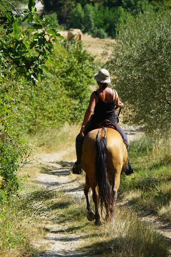 Tuscan Summer Valdichiana, Toscany Brown Horse With Black Tail Full Length Horse From Behind Horse Riding Through Nature Horseback Riding One Animal One Person Rear View Sony A6000 Woman On Horse Woman With Hat From Behind