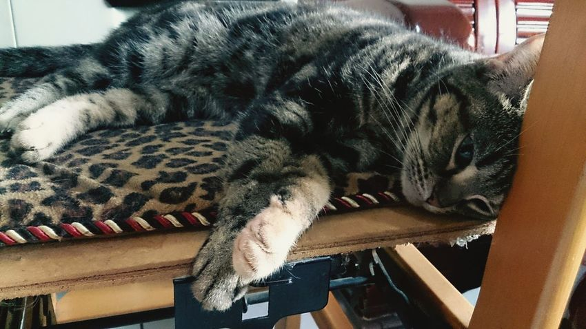 Loving Life! Loving Me Lovinginthemoment Naughty Cat Cat♡ Catsofinstagram