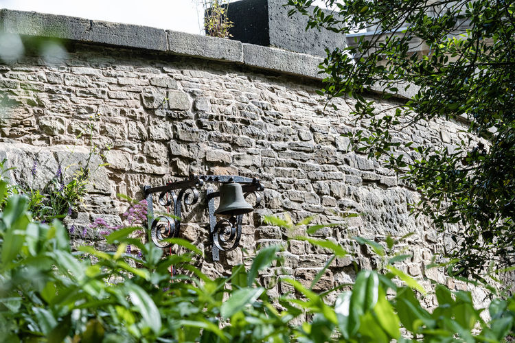 Low angle view of plants on wall of building