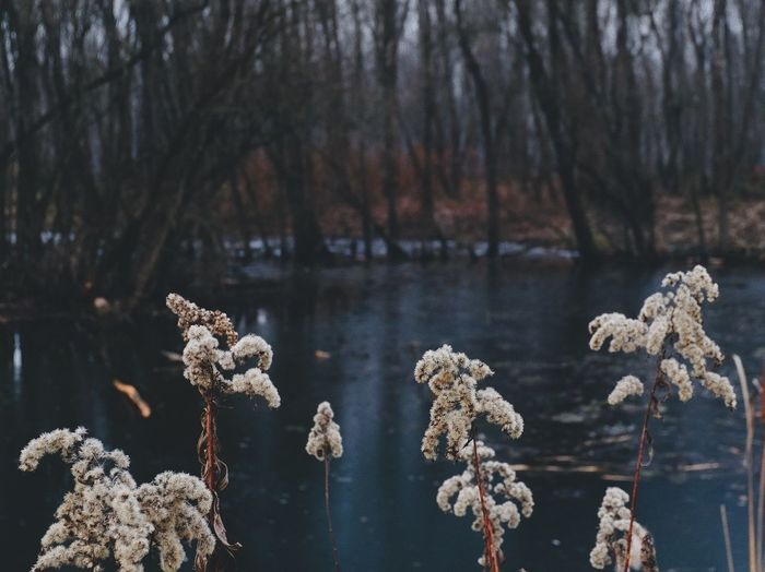 Nature Tranquility Water Tree Cold Temperature Winter Vscocam EyeEm Best Shots Growth Outdoors Forest Close-up No People Snow Day Dried Plant Branch Fragility