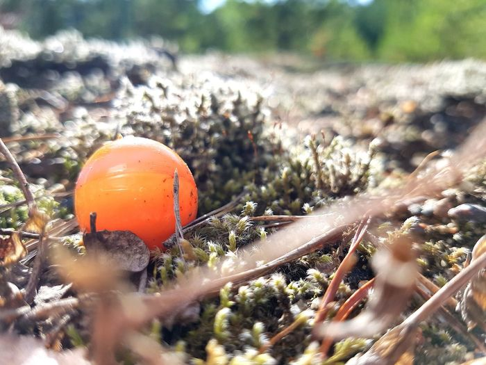 What is that? A mysterious object? A unknown mushroom?... Mysterious Civilisation And Nature Rubbish Interesting Objects At The Forest Paintball EyeEm Selects Nature Outdoors Day No People Plant Growth Close-up Beauty In Nature Freshness Sunlight