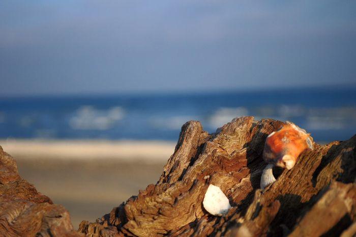Seaside Sea And Sky Seascape Sea View Drift Wood