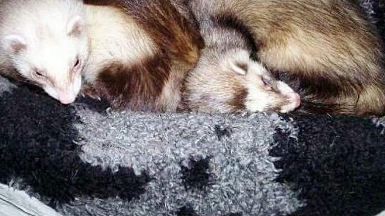 sleeping, animal themes, animal, one animal, mammal, animal wildlife, no people, animals in the wild, day, outdoors, close-up, nature
