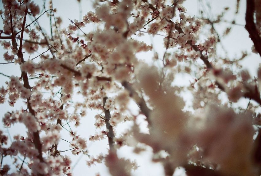 Travel Travel Destinations Istillshootfilm Film Is Not Dead Filmphotography Filmcamera Filmisnotdead Film Photography Film Springtime Freshness Growth Backgrounds No People Full Frame Low Angle View Close-up Outdoors Sky Selective Focus Twig Day