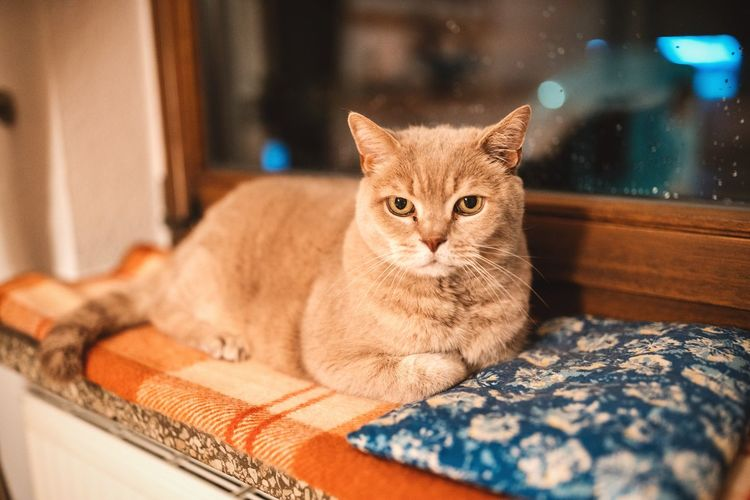 Benni 😽 Domestic Cat Pets Animal Themes Mammal Looking At Camera Portrait One Animal Domestic Animals No People Feline Indoors  Sitting Ginger Cat Close-up Grumpycat Grumpy Brown Cat  Cats Of EyeEm Kitten Animal Portrait Cat Lovers Fat Cat Cats Kitty Sitting Alone