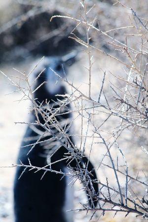 Escondido Wildlife Wildlife & Nature Pingüino Penguin No People Backgrounds Nature Close-up Day Outdoors Fragility