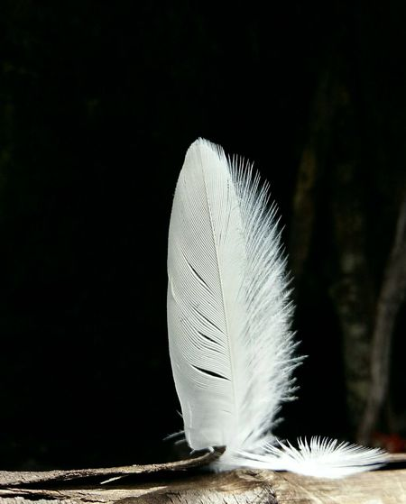 The Feather white!.. Feather  Close-up Feather In The Wood White Feather Of A Bird Darkness And Light Backlit Feather Black And White In Nature Art In Nature Art Photography