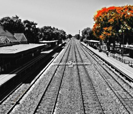 hurlingham train station Southamerica Natgeo Argentina Hurlingham Tree Railroad Track Rail Transportation Outdoors Transportation No People