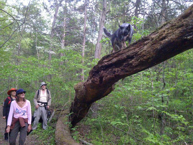 Hiking Animal Themes Climbing Dog Dog Forest Hiking Adventures Hikingphotography Leisure Activity Nature People Tree Wonder Dog