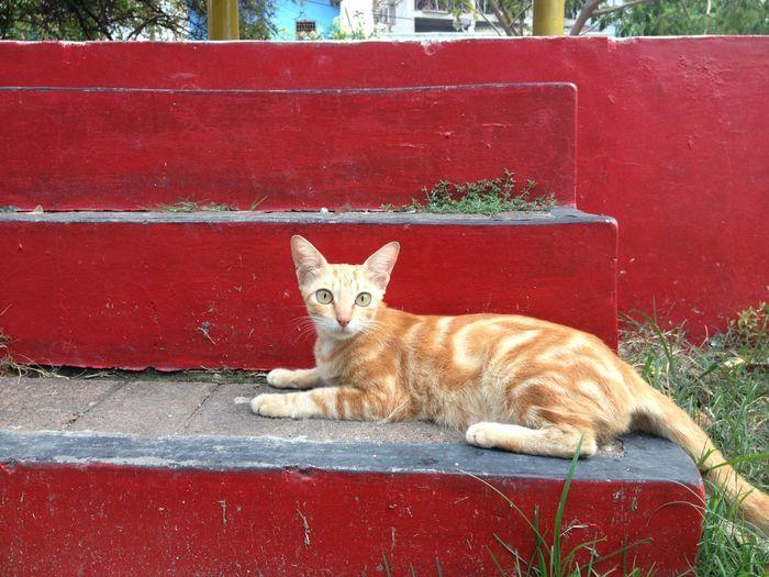 Kucing Cat Animal Pet Peliharaan Orange Color Animal Themes Animal_collection Cute Pets