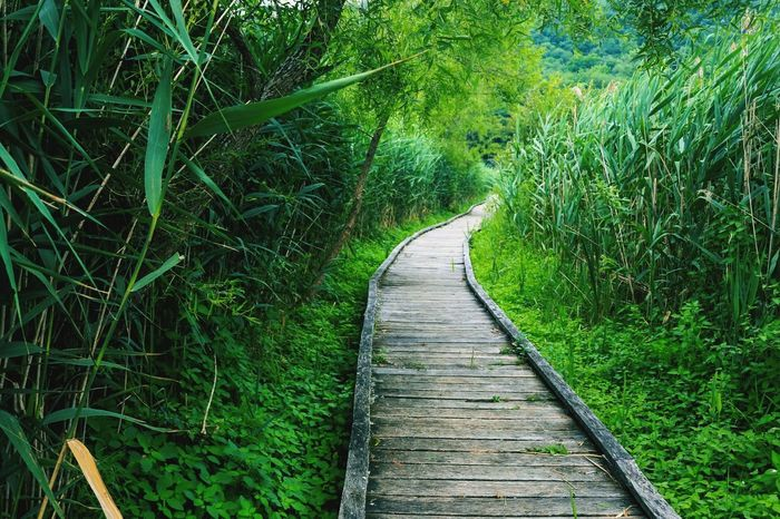 I love it here Plant Direction The Way Forward Tree Green Color Growth Footpath Land Tranquility Beauty In Nature No People Nature Diminishing Perspective Tranquil Scene Boardwalk Outdoors