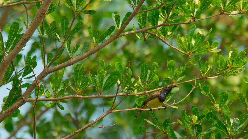Bird Photography Nature Tree Background Beauty In Nature Bird Birdnest Lift Style