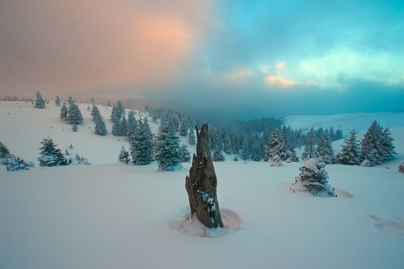 Old stump and trees on snowcapped landscape against cloudy sky during sunset