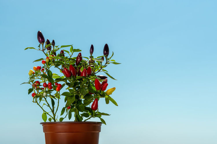 Close-up of potted plant against blue sky