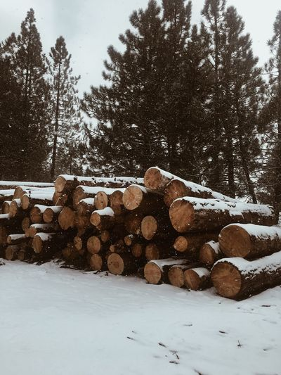 Stack Tree Snow Log Winter No People Large Group Of Objects Outdoors Timber Heap Nature Cold Temperature Beauty In Nature Day Woodpile Sky