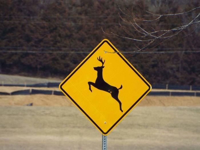 Yellow Road Sign Danger Koala Outdoors No People Day Mammal Deer Deer Crossing Sidn Sign Road