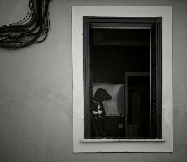 Dog At Window Looking Through Window Viewpoints Urban Lifestyle Silouette And Shadows Blackandwhite Photography No People Dailylifephotos Minimalism #minimalist #minimal #TagsForLikes #minimalistic #minimalistics #minimalove #minimalobsession #photooftheday #minimalninja #instaminim #minimalisbd #simple #simplicity #keepitsimple #minimalplanet #love #instagood #minimalhunter #minimalista #m