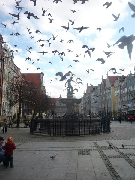 Tromiasto Gdansk Birds City Taking Photos Check This Out EyeEm Birds My3miasto Oldtown Peoplephotography