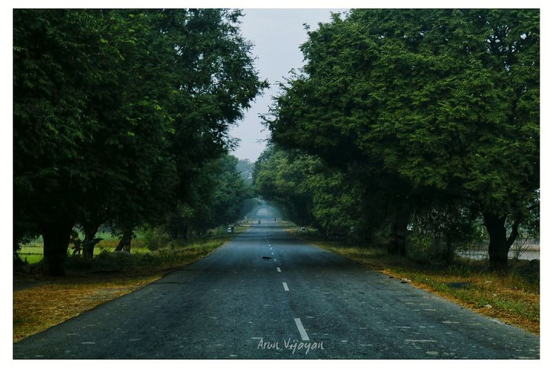 Tree Outdoors Road Diminishing Perspective The Way Forward No People Beauty In Nature Nature First Eyeem Photo EyeEmNewHere