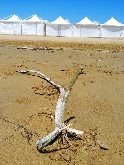 Beach Arid