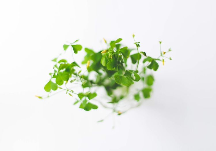 Close-up of salad against white background