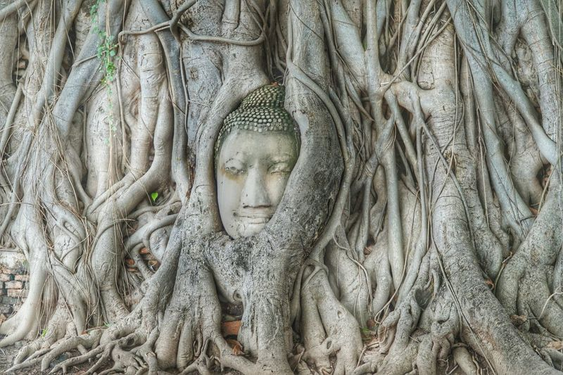 Wat Mahathat Ayutthaya Historical Travel Photography Getting Inspired Buddha Head Tree Roots