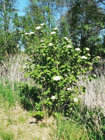 Tree Flower White Green